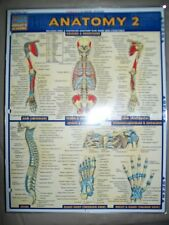 Barcharts Anatomy 2 Quick Study Guide