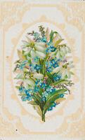 Steinobst Glaskirsche Pfirsich Aprikose Nektarine Chromolithographie 1892