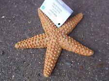 STARFISH  detailed sealife marine creature toy 11x 11cm Wild Safari Ltd