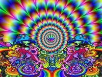 Psychedelic Shrooms Colorful Art Wall Print POSTER FR