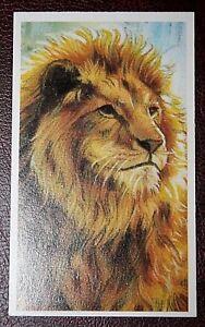 LION   Superb Portrait Card  Unmounted  # CAT M