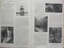 1902 PRINT ~ SOUTH PACIFIC ISLANDS ~ THE ICARUS A TAHITIAN BEAUTY ~ BANANA TREE