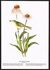 1930s Original Vintage Audubon Bells Vireo Bird Limited Edition Art Print