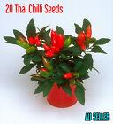 Hot Thai Chilli 20 Birds Eye Chili Seeds Very Spicy Asian Food Organic