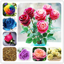 50 Pcs Seeds Rose Bonsai Rainbow Rose Flower 24 Colors Natural Plant Home Garden