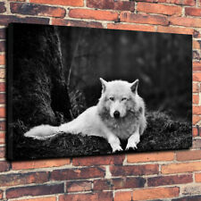 """White Wolf Stunning Printed Box Canvas Picture A1.30""""x20""""30mm Deep Frame Wild"""