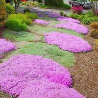 100 PCS Mix Color Seeds Creeping Thyme Bonsai ROCK CRESS Flowers Ground Garden