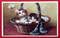 Künstler AK KATZE um 1930 Katzen im Korb    ( 7553