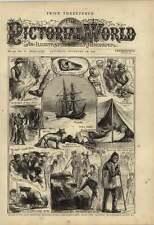 1876 devolución de las muestras de descubrimiento de alerta de expedición ártica almizcle Buey piel de foca