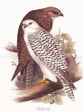 POSTAGE USSR SOVIET STAMP 1965 FALCON BIRD NEW FINE ART PRINT POSTER CC3891