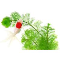 1000Pcs aquarium grass seeds (Mixed), water aquatic plant seeds Home Decor