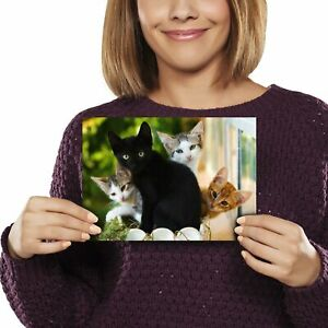 A5 - Cute Kittens Black Tabby Ginger Cat Print 21x14.8cm 280gsm #24573