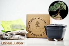 Chinese Juniper Bonsai Seed Kit Gift Complete Kit to Grow Gift Holiday Decor