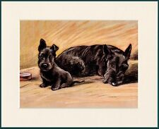 SCOTTISH TERRIER SCOTTIE DOG AND PUPPPY LOVELY DOG PRINT MOUNTED READY TO FRAME