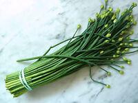 1g (appr. 300) garlic chives seeds ALLIUM TUBEROSUM Chinese chives, Chinese leek