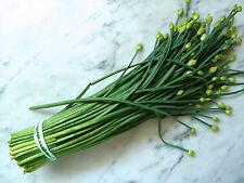 1g (appr. 300) ciboule de chine graines allium tuberosum chinois de ciboulette, chinois poireau