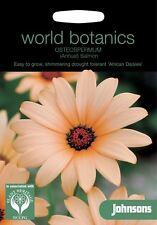 Johnsons World Botanics Flower -Osteospermum (Annual) Salmon - 100 Seeds