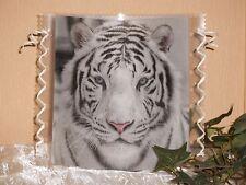 Tischlicht/Windlicht - Tiger -Tigerkopf - weißer Tiger