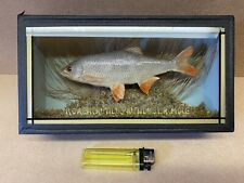 More details for tiny roach fish