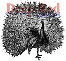 Deep Red Stamps Peacock Rubber Cling Stamp