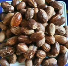 Dried ORGANIC WHOLE NUTMEG - 150 GRAM  Free Shipping (With Tracking No)