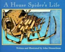 House Spider's Life