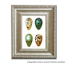 Bird Eggs no8 Easter Decoration Vintage Bird Egg Prints Antique bird egg plate