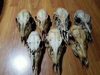 7 Deer Skulls Taxidermy Oddities Creepy Crafts Occult Morbid Curiosities Lot 1