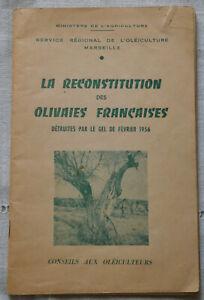 1958 La reconstitution des olivaies françaises Détruites par le gel février 56