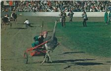 Indio, Ca - Riverside County Fair - Ostrich Races
