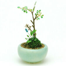 Bonsai Group Ebay