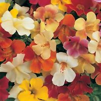 Kings Seeds - Mimulus Magic Mixed F1 - 60 Seeds