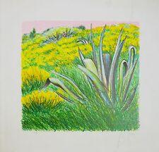 AZZINARI FRANCO litografia + cornice Fiori campo natura aloe ginestre grecoarte