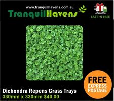 Trays of Dichondra Repens **A TRULY NO MOW LAWN - Trays 330mm x 330mm Free Post