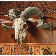 Exotic Ram Skull & Curled Horns Wall Animal Trophy Replica Sculpture