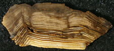 Hell's Canyon HERRINGBONE PETRIFIED WOOD ... nice slab