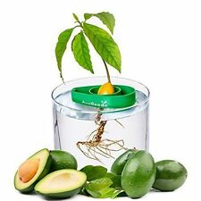 x1 AvoSeedo - Grow your own Avocado Tree, FREE EXPRESS ,