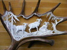HAND CARVED MOOSE ANTLERS, GROUP OF DALL SHEEPS , decor taxidermy skull hunting