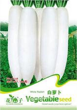 1 Pack 100 White Radish Seeds Raphanus Sativus Daikon Garden Vegetable C038
