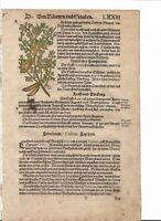 Cederbaum  verm. aus Kreuterbuch, verm. 2.A. Loritzer 1550  2 handkoloriert