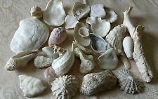 Small Lot of Various Size Natural Seashells Home or Garden Decor