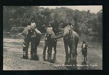 Ceylon Katugastota Animals Temple ELEPHANTS c1920/30s? RP PPC