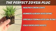 Zoysia Grass Plugs TWO TRAYS = 100 Plugs FREE SHIPPING Order Zoysia Lawn Now