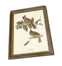 Vintage Cardinal Framed Art Print. Richmoneda Cardinalis. Wall Hanging Decor