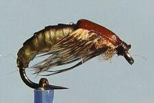 5 x Mouche de peche Nymphe Sedge H10/12/14/16 mosca fliegen nymph fly