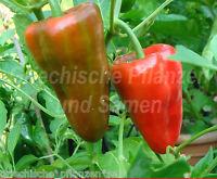 🔥 🌶️ LEUTSCHAUER Paprika rot*Chili *Schoten-Pfeffer*10 Samen