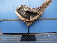 "URALTE Treibholz Skulptur ""Teufelsmuschel"" von Neptun Arts SKUL 094 Devil Shell"