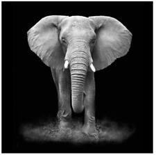 Pannello Radiante Elettrico Quadro Termico 60x60cm 450W Vannini Elefante