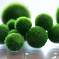 1pc Green Seaweed Ball Moss Live Aquarium Plant Fish Decoration Pet Supplie Nice