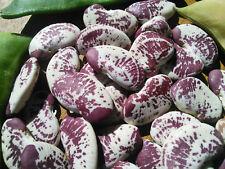 Madagascar Tropical Lima Bean : Organic Seed : Perennial Permaculture Raw Edible